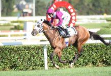 Gazi Koşusu ne zaman, saat kaçta, hangi kanalda? Gazi Koşusu hangi atlar yarışacak, şampiyon ne kadar kazanacak?